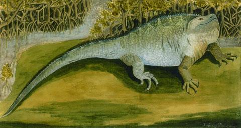 Iguana (1770), by John Lindsay