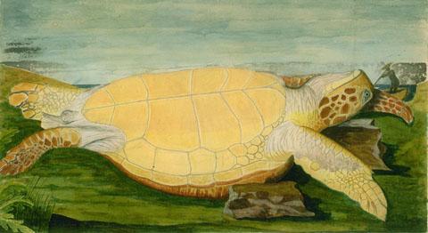 Turtle (1770), by John Lindsay
