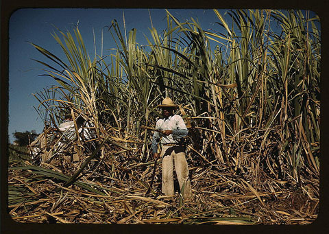Sugar cane worker, Puerto Rico, 1942